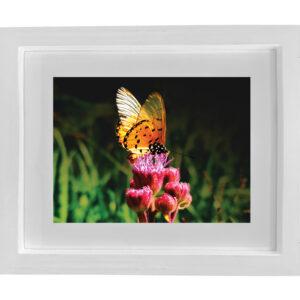 Watson_Butterfly_A2_white